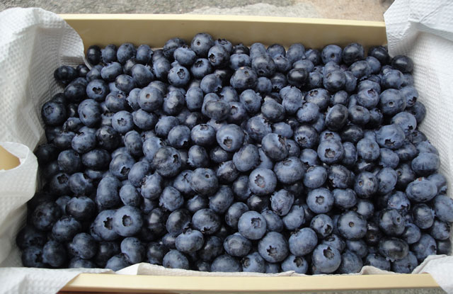 The boxed blueberry